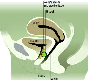 A Man's G Spot http://www.dna-et.com/random-neural-bits/g-spot-oh-man-after-an-arm-twisting-and-a-comparing-of-notes-